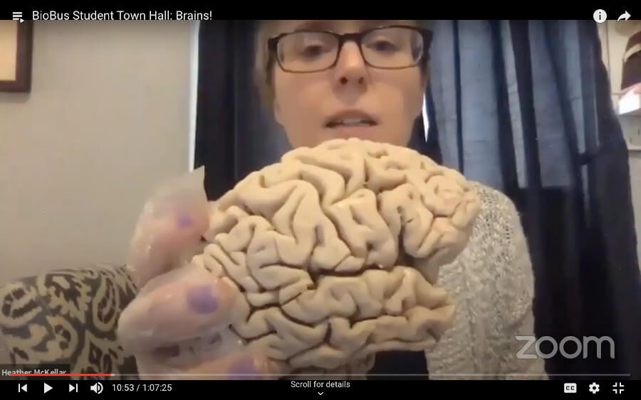 Neuroscientist Heather McKeller shows a brain as part of a virtual Student Town Hall organized by BioBus, Inc. in New York City.