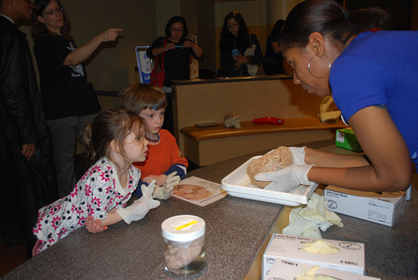 UNC graduate student Sierra Stringfield shows a human brain to young visitors. Bowles Center for Alcohol Studies, University of North Carolina