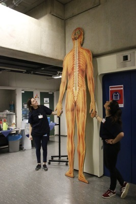 A giant man illustrating the brain and nerves at an event organized by Erasmus MC - Department of Neuroscience and Psychiatry in Rotterdam, Netherlands