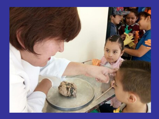 Children learn about the brain during an event organized by Hospital Psiquiatríco Samuel Ramírez Moreno in Mexico