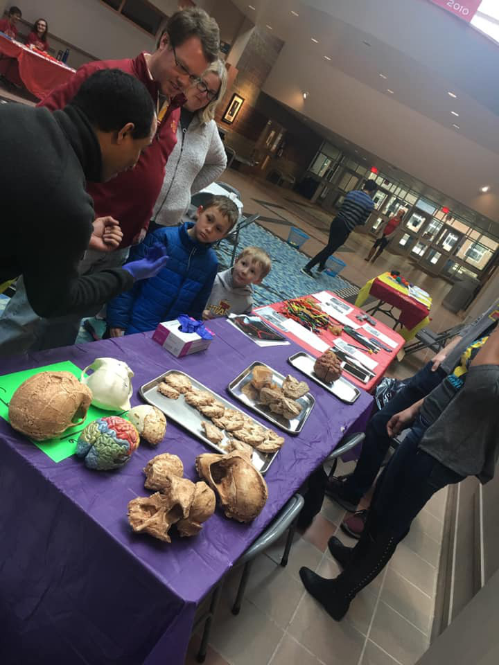 Examining brain specimens during an event organized by Iowa State University.