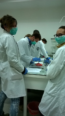 Brain Sub-dissection class organized for BAW by Sarajevo School of Science and Technology in Bosnia and Herzegovina