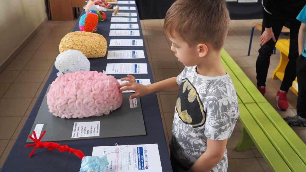 A kindergarten student visits a 3D Model Gallery of brains and neurons organized by the Association of Private Schools in Opoczno in Poland.